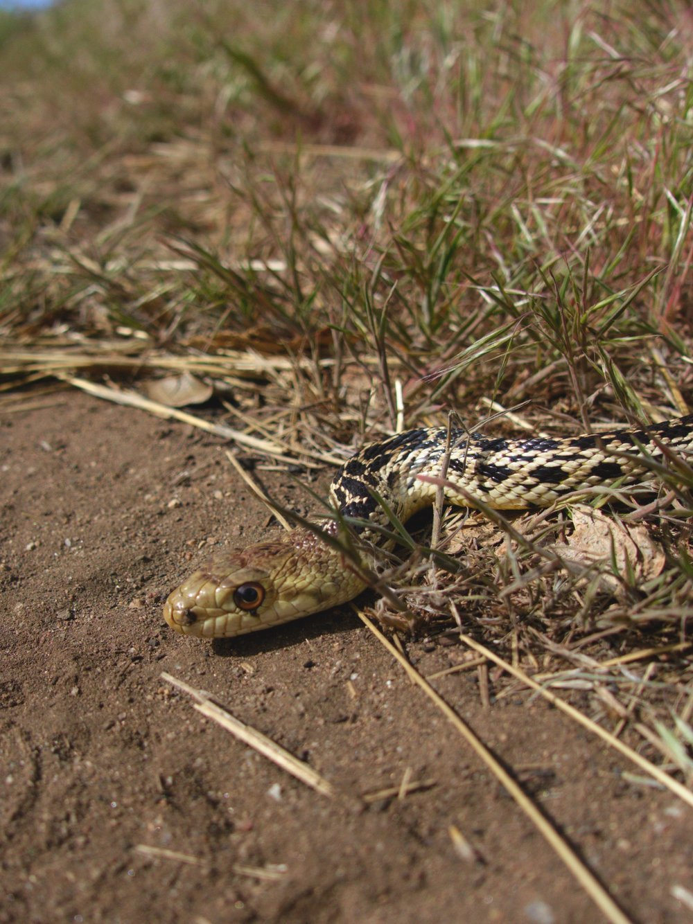 Little snake photo shoot.