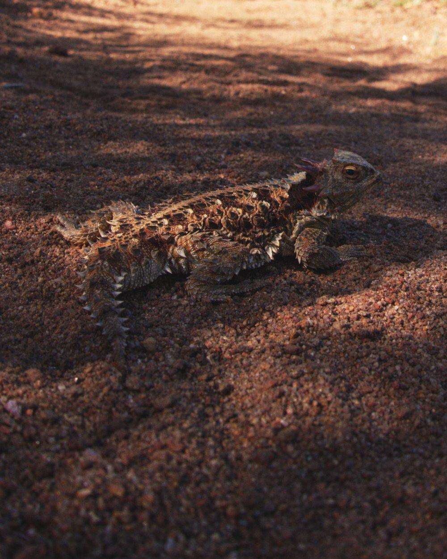 Little lizard photo shoot.