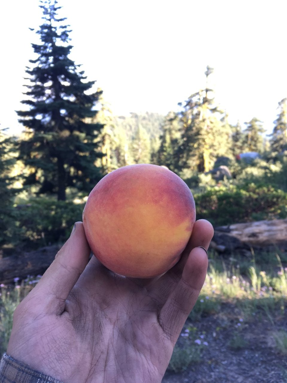 Clean peach in dirty hand. It's a work of art. That's it's name.