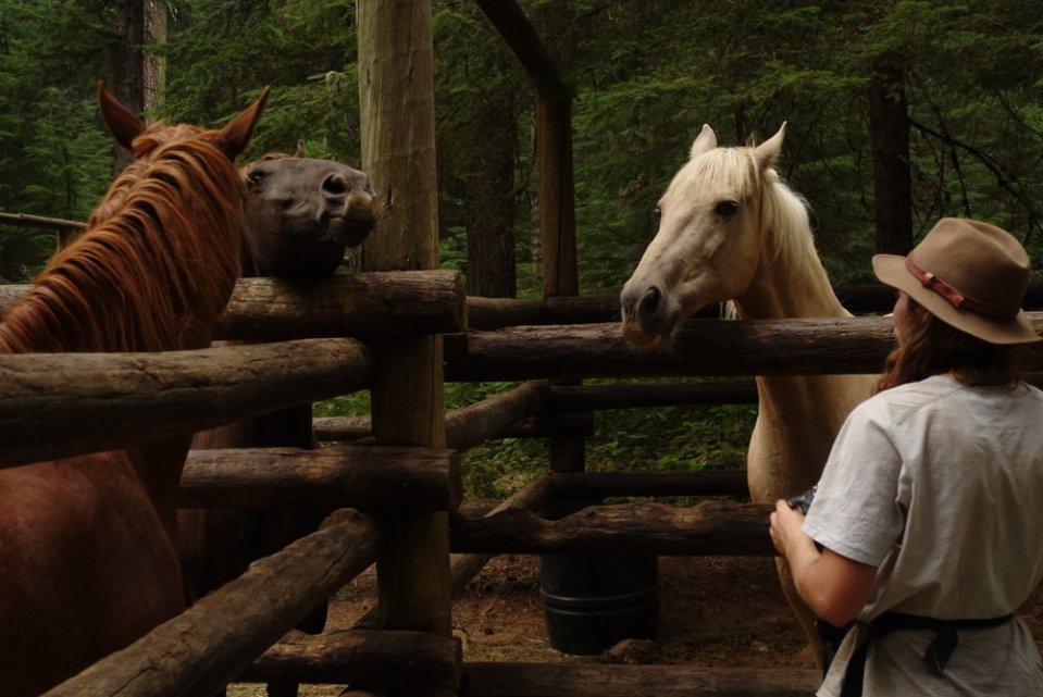 Simba the horse whisperer.