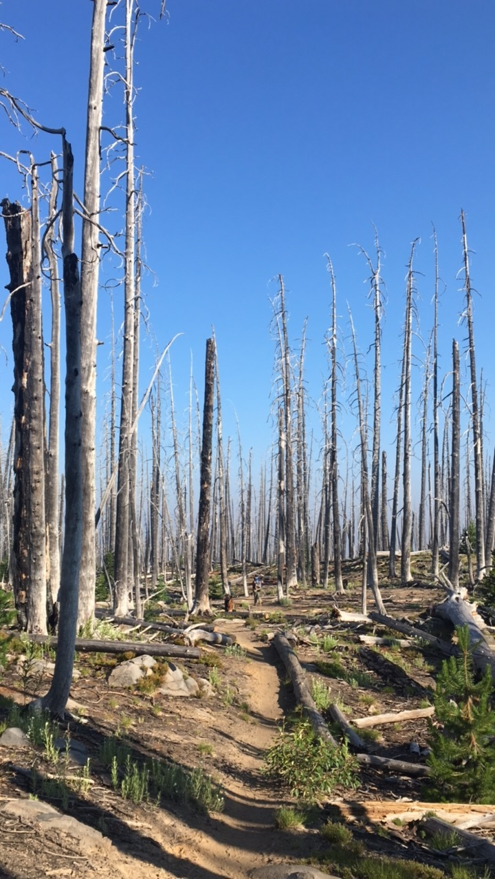 The workings of a forest fire.