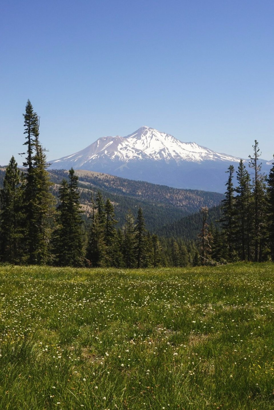 Shasta, the mountain that we all draw as kids, without even knowing it.